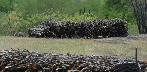 Grupo luta pela preservação da Caatinga no Sertão do Pajeú